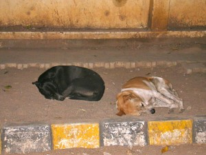 Stray dogs sleeping in the streets of Bangalore